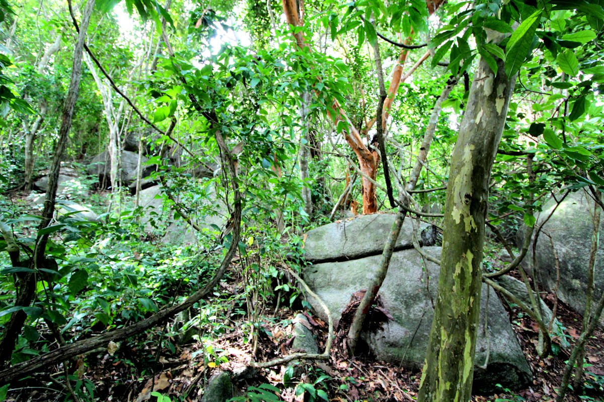 Tayrona rain forest