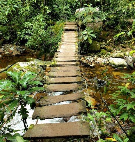 Valle de Cocora rickety bridge