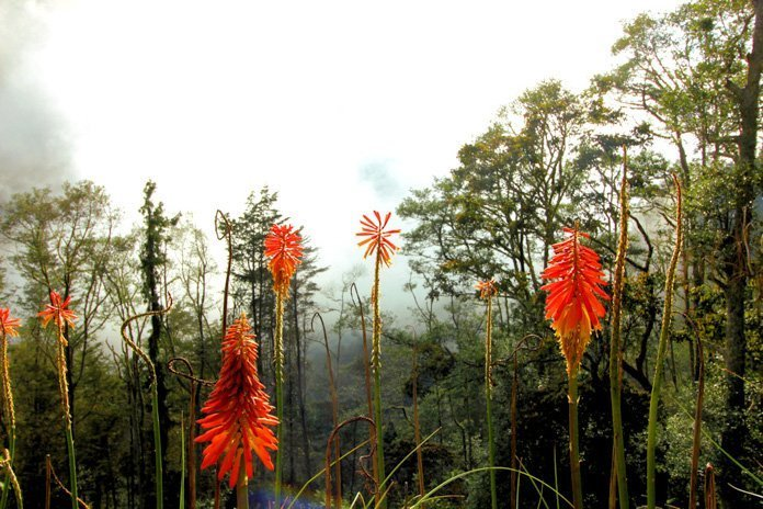 Valle de Cocora flowers