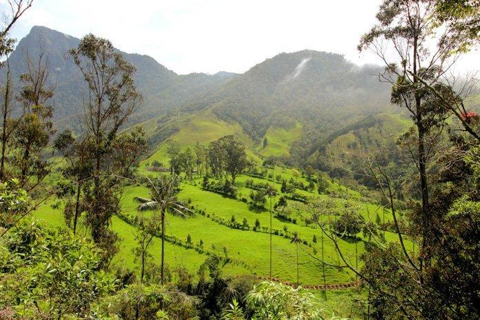 Valle de Cocora greenery