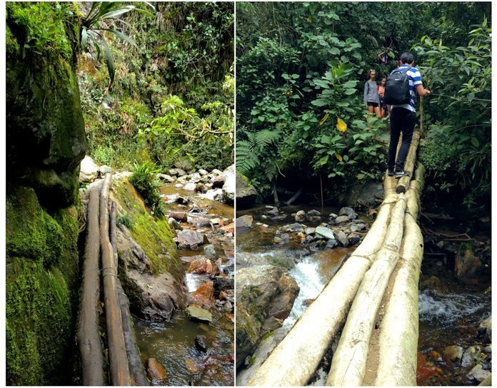 Valle de Cocora log bridges
