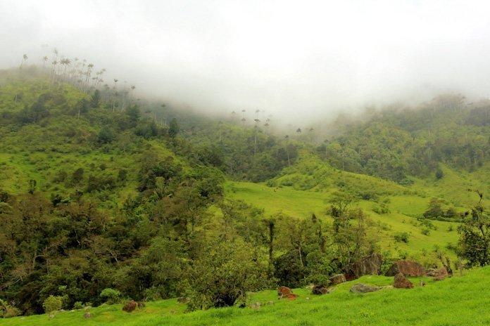 Valle de cocora hike landscape